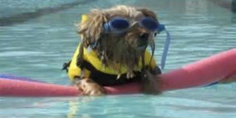 5 Pet Safety Tips for Hurricane Season, Foley, Alabama