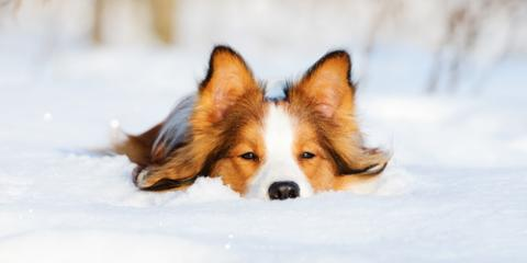 Why Dog Vaccinations & Tick Medications Are Important in Winter, Avon, Ohio