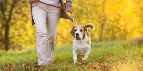 Why Is Dog Walking Important for Your Pup? Addison Pet Sitter Explains, Addison, Illinois