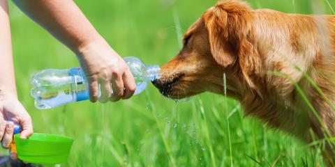 5 Tips for Keeping Your Dog Cool This Summer, Statesboro, Georgia