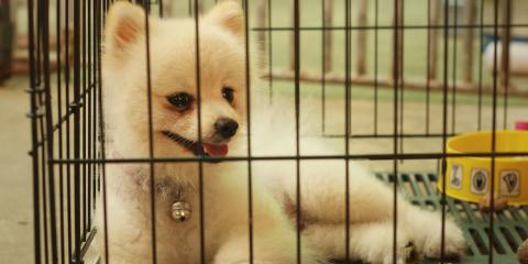 5 Tips for Crate Training a Puppy, Ewa, Hawaii