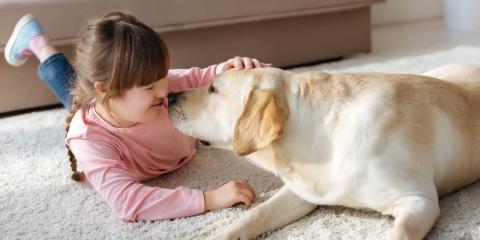 3 Ways to Keep Your Dog Active, McKinney, Texas
