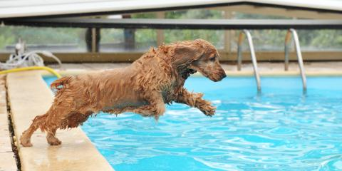 How to Help Your Dog Love Water, Royse City, Texas