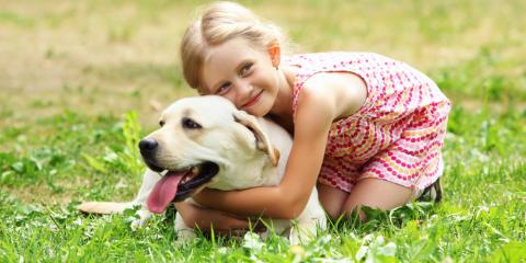 A Doggy Day Care Lists 3 Ways to Stop Your Pooch From Biting, Churchville, New York