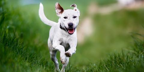 Top 3 Dog Parks In the Cincinnati Area, Newport-Fort Thomas, Kentucky