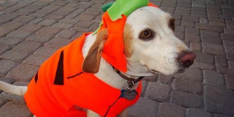 3 Dog & Cat Health Tips to Guarantee a Safe, Fun Halloween, Port Orchard, Washington