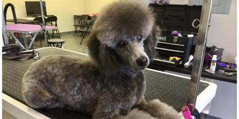 Dog Grooming School of Pennsylvania, Pet Grooming, Services, Langhorne, Pennsylvania