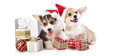 Doing Your Holiday Shopping on Amazon?  AmazonSmile Wants to Donate 0.5% of Your Purchase to Helping Needy Animals!, Stratford, Connecticut