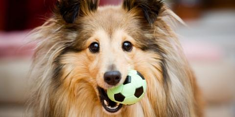 3 Ways Dog Day Care Benefits Busy Parents, Highland Village, Texas
