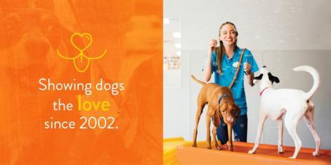 Dogtopia of Highland Village, Pet Day Care, Services, Highland Village, Texas