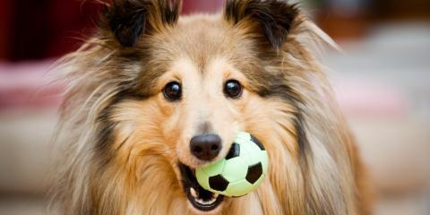 3 Dollar Tree Toys Your Dog Will Love, College, Pennsylvania