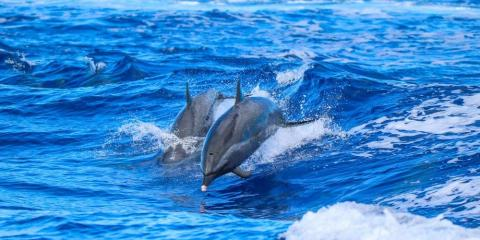 Do's & Don'ts for a Dolphin Excursion, Waianae, Hawaii
