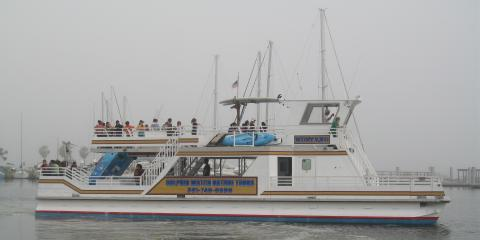 How To Make Your Dolphin Watch Tour Unforgettable Woody S Sports