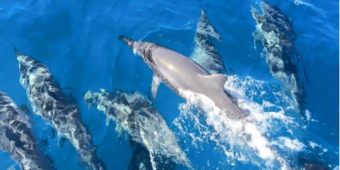 Dolphin Watching 101: Fun Facts About Hawaiian Spinners , Kekaha-Waimea, Hawaii