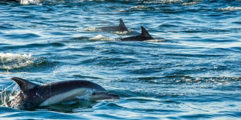 Memorable Dolphin Tour Adventures in Honolulu Earns Rave Reviews! , Honolulu, Hawaii