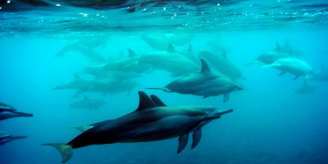 Are Dolphins the Smartest Ocean Animals? , Ewa, Hawaii