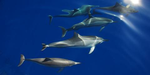 10% Off Dolphins and You Tour, Honolulu, Hawaii