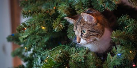 Do's & Don'ts to Keep Pets & Christmas Trees Safe, Honolulu, Hawaii