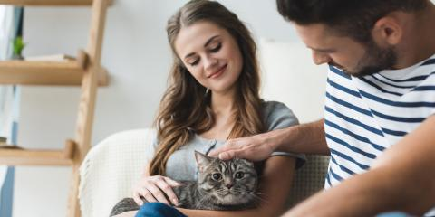 5 Pet Care Tips for Introducing a New Cat to Your Home, Dothan, Alabama