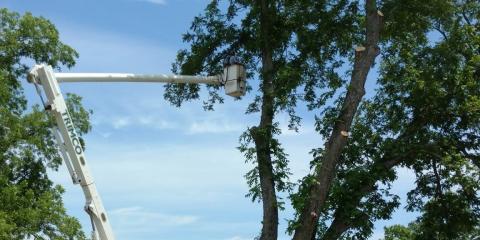 5 Signs You Need Tree Removal Service, Midland City, Alabama