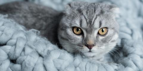 5 Misconceptions About Cats Cleared Up, Dothan, Alabama
