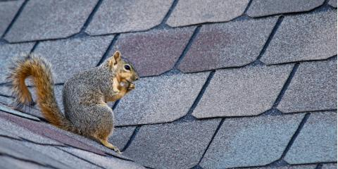 Top 5 Signs That Your Home Needs a Roof Replacement, Dothan, Alabama