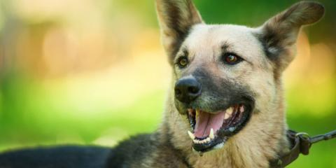 Bitten by a Dog? How Your Actions May Affect the Claim, Dothan, Alabama