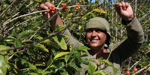 How Fair Trade Coffee Promotes Gender Equality, Solon Springs, Wisconsin