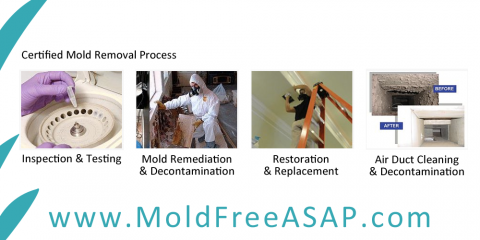 Dove Services Inc, Mold Testing and Remediation, Services, Gulf Shores, Alabama