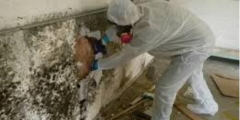 Why Mold Remediation Is Important, Omaha, Nebraska