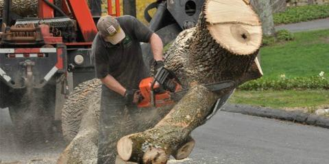 Connecticut's Tree Experts Reveal 4 Signs You May Need Tree Removal Services, Danbury, Connecticut