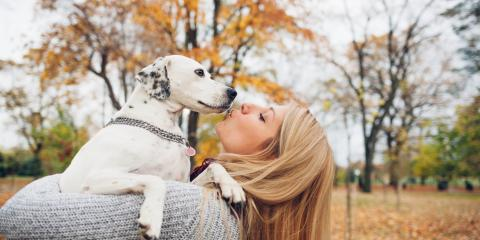 Why Your Dog Needs a Pet Vaccination for Leptospirosis This Fall, Denver, Colorado