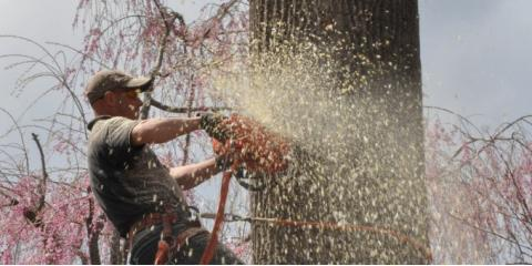 Don't Get Stumped: 3 Reasons You Should Leave Tree Removal to the Pros, Danbury, Connecticut