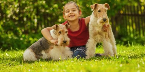5 Lawn Care Tips for a Dog-Proof Yard, Long Valley, New Jersey
