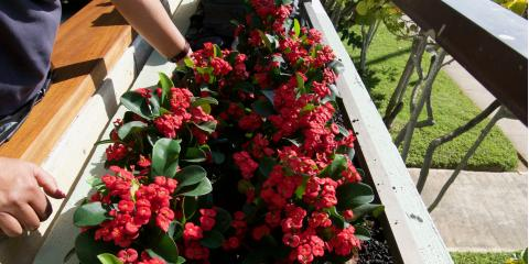 What You Need to Know About Sustainable Landscape Construction & Gardening, Honolulu, Hawaii