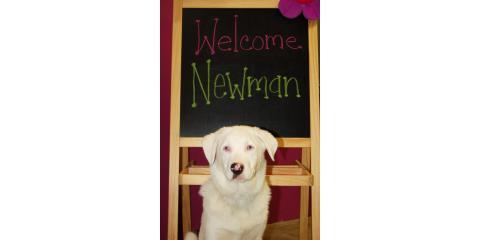 Doggy Day Care Cincinnati Ohio