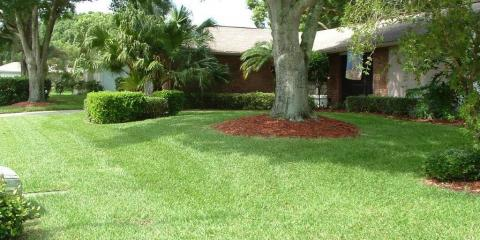 What is a Chinch Bug and Why should I care?, Jasmine Estates, Florida