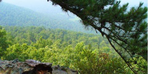 Deep South Outdoors, Hunting, Services, Belvidere, Tennessee