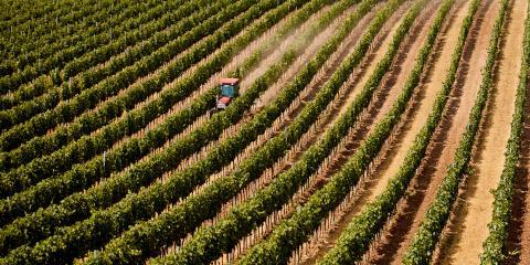 4 FAQ About Crop Insurance, Dumas, Texas