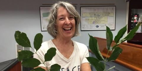 Emerald Ash Borer threatens trees in Brockport, Henrietta, New York