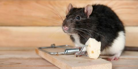 4 Mouse Control Tips in Case There's an Infestation, Eagan, Minnesota