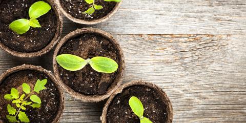 Flower Experts Share 3 Spring Gardening Ideas, Anchorage, Alaska