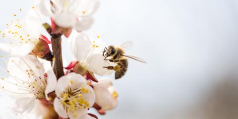 4 Tips to Attract Pollinators to Your Garden, Anchorage, Alaska
