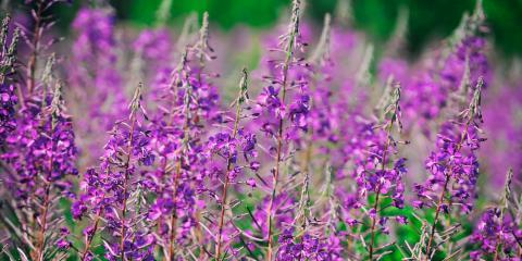 Garden Supplies Retailer Shares 5 Fun Summer Projects, Anchorage, Alaska