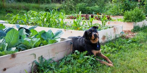What Are the Benefits of Raised Garden Beds?, Anchorage, Alaska