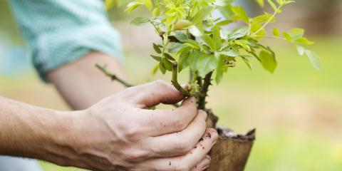 Eagle River Garden Center Offers 3 Important Tree Care Tips, Anchorage, Alaska