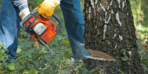 3 Signs You Should Have a Tree Removed, Guilford, Connecticut