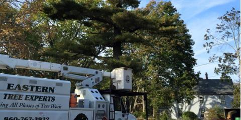 Eastern Tree Experts LLC, Tree Service, Services, Guilford, Connecticut