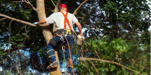Why You Should Schedule a Tree Inspection Before You Buy a Home, Seymour, Wisconsin