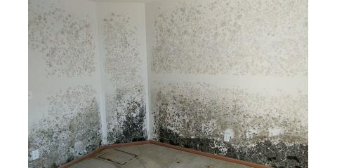 Mold Removal Experts Explain Where & Why Mold Grows, Omaha, Nebraska